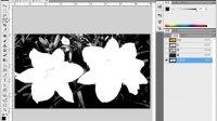 用多媒体学Photoshop CS5--通道与抠图[edusoft.com.cn育碟软件]