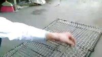 新款捕猎捕鸟拍网使用电子捕鸟器 电煤引鸟器