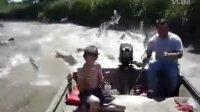 【放放上传】美国河流昂贵野生鲤鱼泛滥成灾