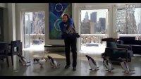 波普先生的企鹅MV - Mr. Popper's Penguins Music Video