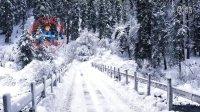 雪花落在松树上圣诞雪景视频素材SnowFallingDreamScene