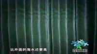 纪录片《森林之歌》浓缩精华版