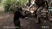 不要把AK47给黑猩猩