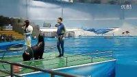 表演 -海狮
