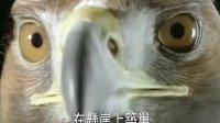 鹰之重生-雄鹰的一生-震撼励志短片