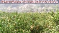 浦城县石陂镇南岸村有平南甜桔柚农民专业合作社桔柚生态果场