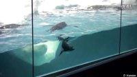 美国海洋世界遇企鹅 Encountering Penguins at SeaWorld USA-旅游-高清完整正版视频在线观看-优酷