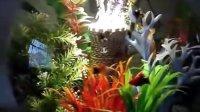 30L BiOrb生态自洁鱼缸造景展示四(树丛中的碉楼)