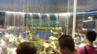 【andyran.com】实拍世博会中国馆出口 人造自然的大荷花池