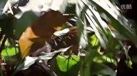 蚂蚁 大自然的神秘力量