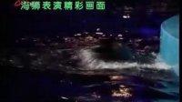 黑龙江电视台春节海狮表演