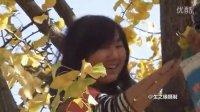 音画时尚(一):银杏树与美少女