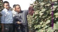 金龙珠生物肥为农户带来的喜悦 巨野龙珠生物肥 13346203222 www.sdjylz.com