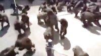 【藤缠楼】给群猴喂食的震撼场面