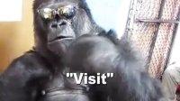 【时光】我是史上最酷猩猩!