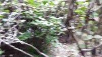 实拍儿童公园原始灌木丛