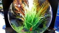 30L BiOrb生态自洁鱼缸造景展示一(某客户超美的造景!!!)