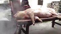 2012新年杀猪全过程