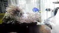 魚缸中活珊瑚