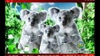 香江野生动物世界春节广告