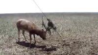 鹿王之殇-------谁是凶手?麋鹿王的最后时光 第一季