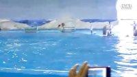 青岛海洋馆看表演2