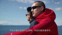 体验奥克兰:鲸鱼海豚生态之旅