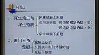中国医科大学-系统解剖18