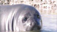 シリーズ世界遺産100 [アルゼンチン] シャチの来る海 バルデス半島