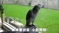 灰鹦彭彭说话综合版