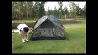 迷彩弹簧帐篷搭建