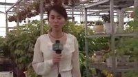 《走进东部新区》--怀仁:发展设施农业 力促农民增收_怀仁588信息网