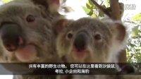 澳大利亚 尽是不同 南澳 旅游介绍短片