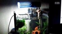 我家的两个鱼缸! 孔雀草缸和金波子缸!!
