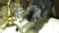 Our smartest cat. 兰蔻