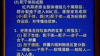 《病原生物学》第34讲-共36讲-中国医科大学
