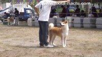 犬舍烈火参加比赛视频