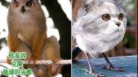 假如克隆和转基因合法化后将出现的新动物