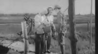平原游击队(1955年)