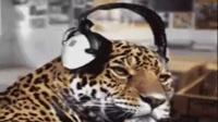 2008最新DJ慢摇抢先听