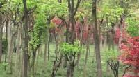 【原创】巴渝毛的视频/《黄家码头绿苑》