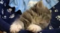 史上最可爱的猫咪睡姿
