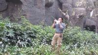 《山鹰之歌》-悠悠山谷的排箫与口哨