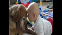 小宝宝和金毛说话,笑死了!!狗狗搞笑视频