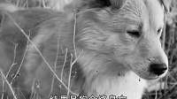 佛教教育短片  杀生因果(上)/