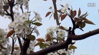 滦南的春天