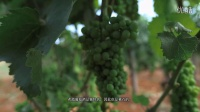 稀有的希腊美酒
