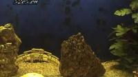 观赏鱼赏析 - 我曾经的网站宠物视频门户52c5.cn 的原创视频