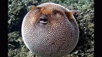 【猴子派】100种异形珍稀生物