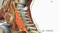 第02讲、用三维立体模型学习人体解剖学!(原版)(第一版)